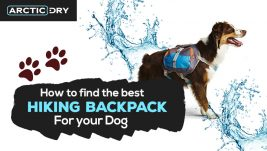 best-hiking-backpack-for-your-dog