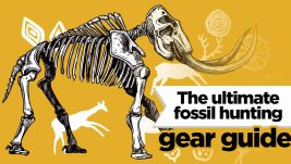 fossil-hunting-equipment-guide
